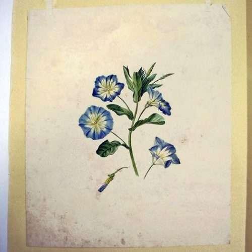 Micucci Interiors - Hollandse School – Blauwe Bloemen