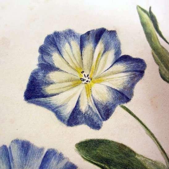 Hollandse School-Blauwe Bloemen